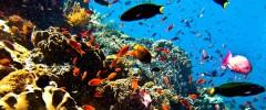 """Die schönsten Hochzeitsorte: Unterwasser auf bzw. """"unter"""" Bali"""